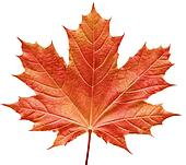 Maple Leaf stock photos and images