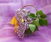 Serenelle in uno cesto - Serenelle fiori ...