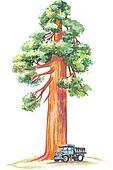 Redwood tree Clipart EPS Images. 24 redwood tree clip art vector ...