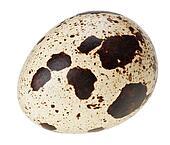 One quail eggs isolated on  Quail Egg Clip Art