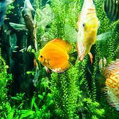 Stock foto salzwasser fische in dass for Salzwasser aquarium fische