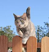 how to stop a cat jumping over a fence