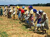 africa training manual African organic agriculture training manual a: introduction 1 about this training manual a-1 organic agriculture – an initiative within sustainable.