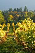 pictures of fall colours along a country road in the