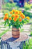 花瓶由美好的globeflowers春天橙色花在残余部分的填装了
